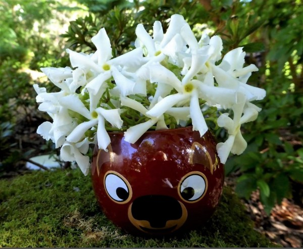 Whimsical posy of star jasmine