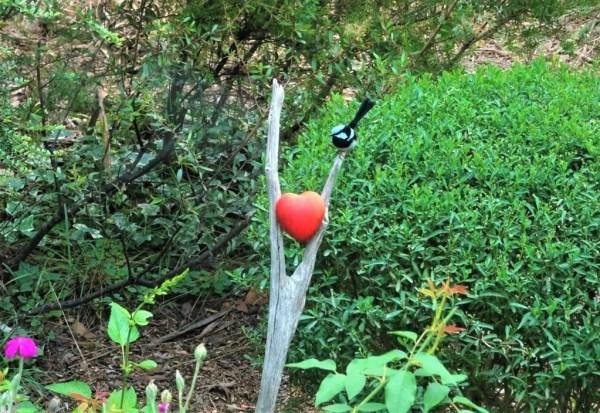 Blue wren Valentine image