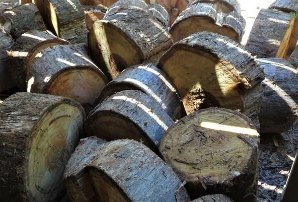 Eucalypt firewood