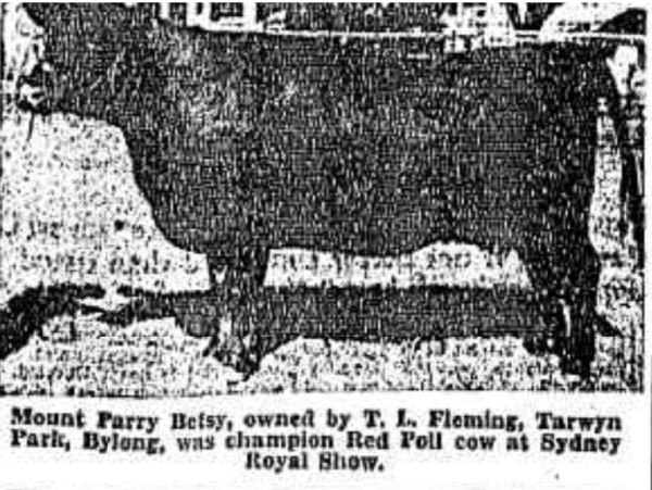 Tom Flemings cattle were judged highly, but in the court of public opinion he was guilty.