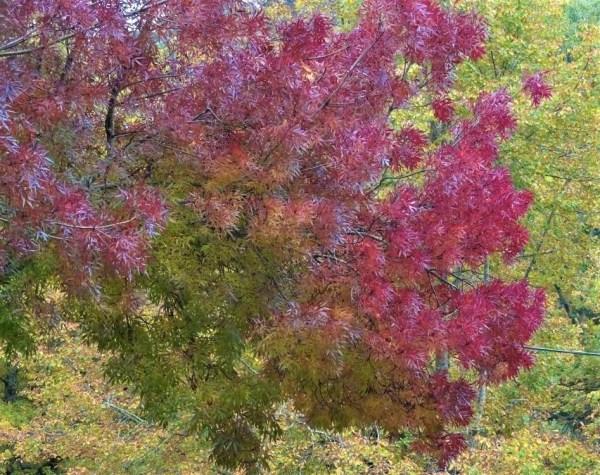 Autumn colour at Blackheath