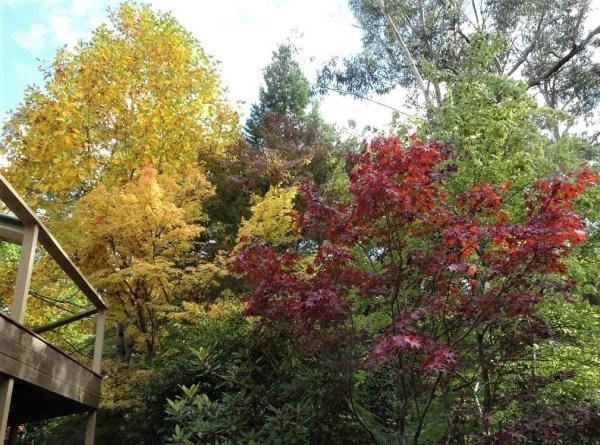 Blackheath autumn
