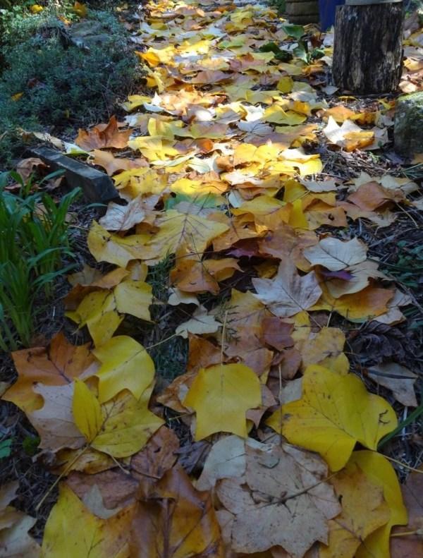Tulip leaf path