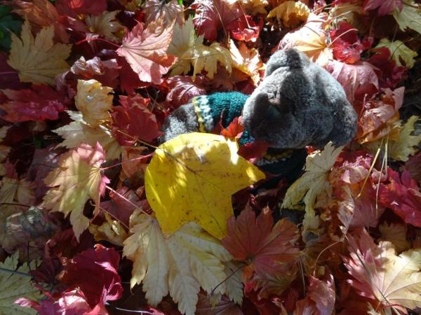 Editor Des in the autumn leaves