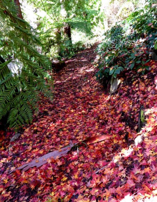 Maple leaf path at Blackheath