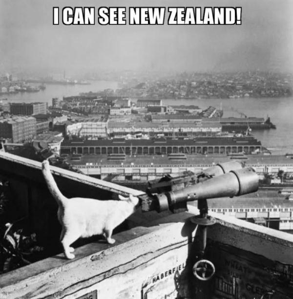 Cat's eye view from Sydney Harbour Bridge