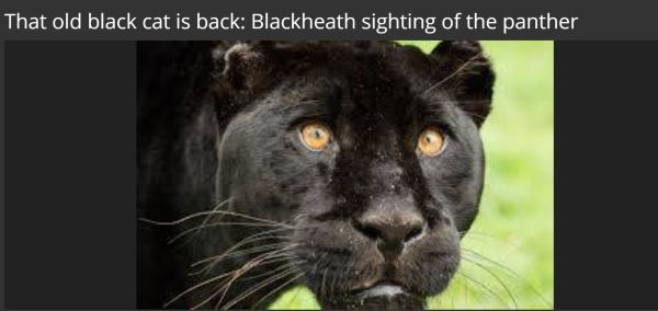 Mythical Black Panther  of Blackheath