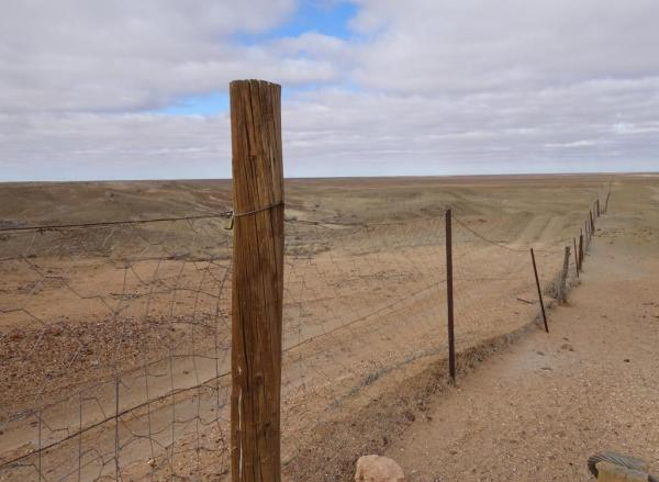 TheDingo Proof Fence.