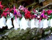 DIGITALIS - DEADLY GLOVES FOR LITTLE FOXES