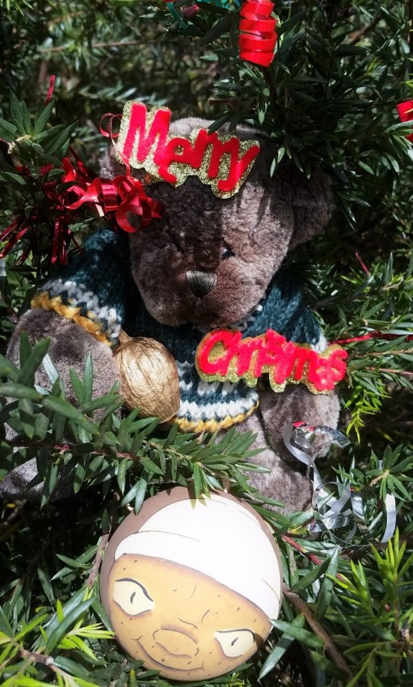 Australian Christmas decorations  in a Grevillea.