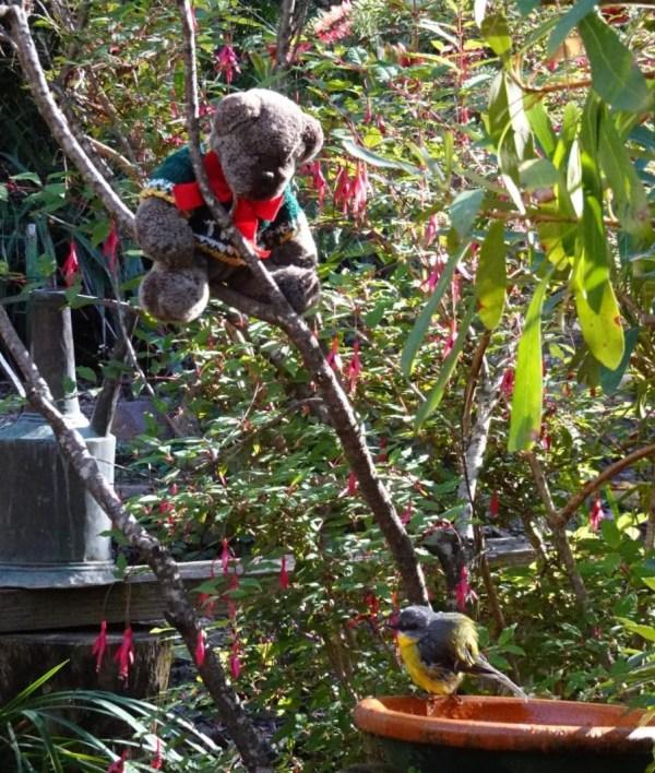 Birdwatcher Editor Des