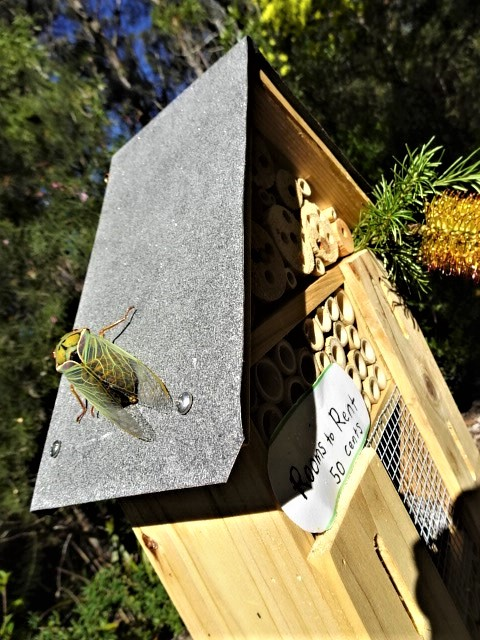 A 'Greengrocer' cicada takes a look at the hotel.