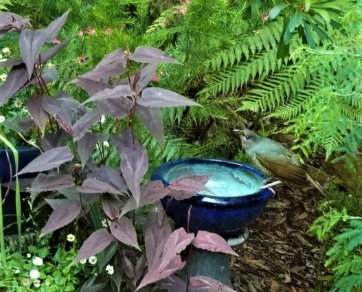 Persicaria surrounds  surrounds a birdbath.