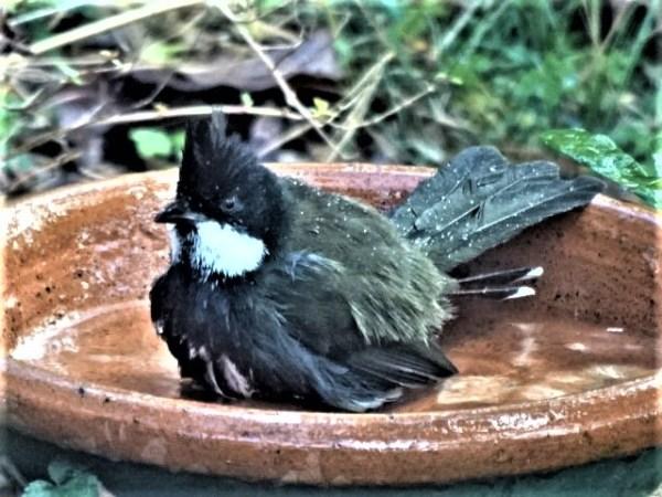 Morning bath.