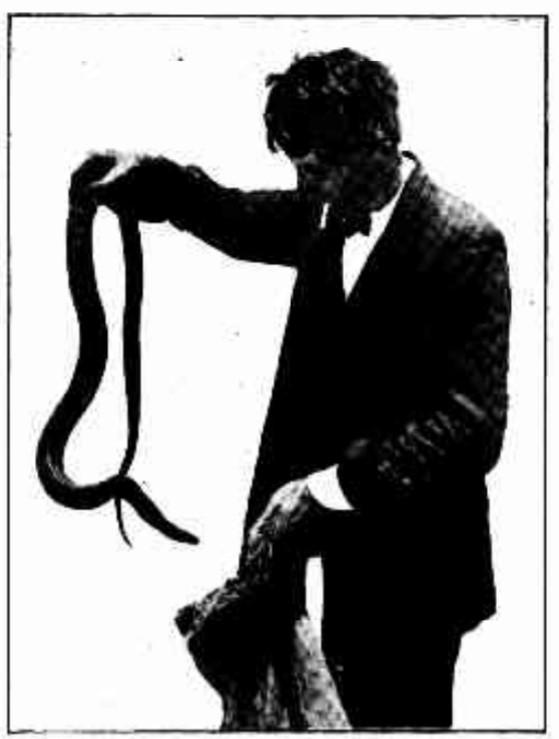 'Professor' Fox . Hermann Krefft was an associate.