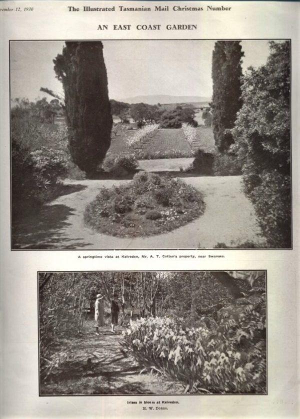 The garden at Kelvedon, Swansea.