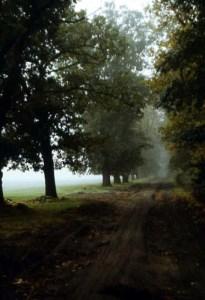 Richtung Pessin im Morgennebel