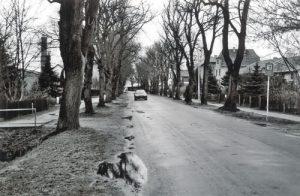 ... noch genauso aus wie 2007. Ob in fünf Jahren hier noch Bäume stehen, ist allerdings fraglich. Etliche sollen bereits zur Fällung freigegeben sein.