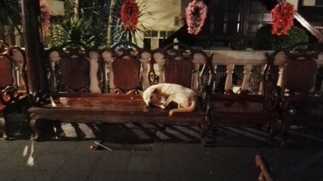 chien errant Thaïlande