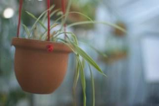 Plantenasiel Hangplanten