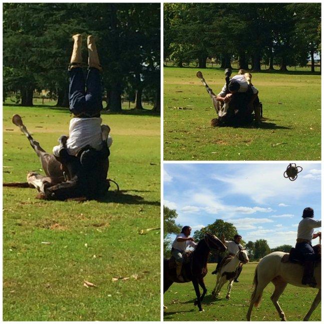Gauche Horse show