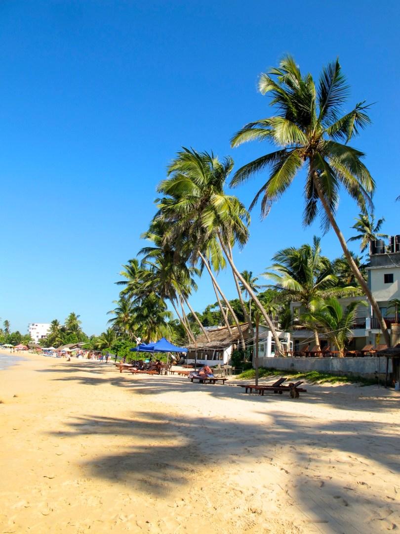 Mirissa Beach in Sri Lanka is the Perfect Paradise for a Beach Lover