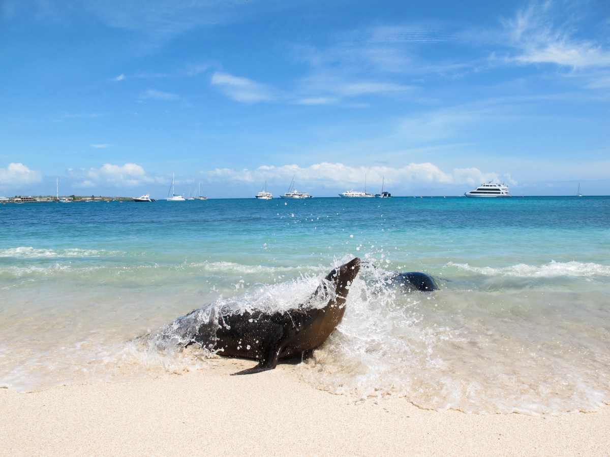 7 Great things to do in San Cristobal - The Galapagos Island