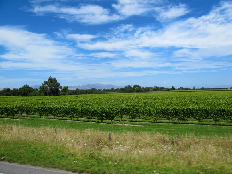 7 Great places to visit in New Zealand - Wine