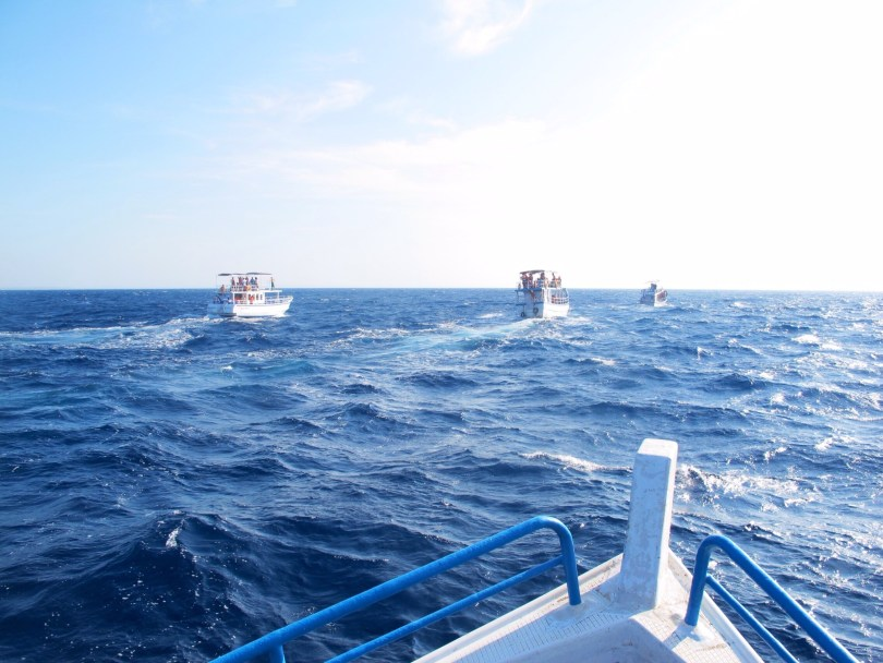 Whale and Dolphin Watching in Mirissa requires some boats
