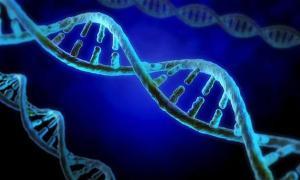 apa yang dimaksud dengan genom