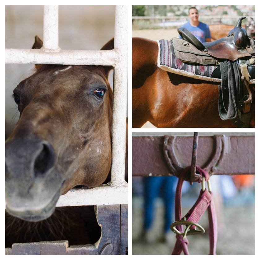 More portraits of horses