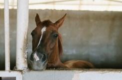 Beautiful horses-102 copy