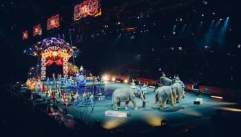 Grey elephants performing at a circus