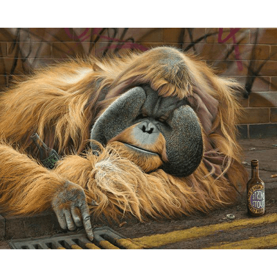 Alfred The Grate Orangutan Paul James Artwork
