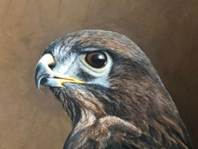 Buzzard Paul James Original Artwork