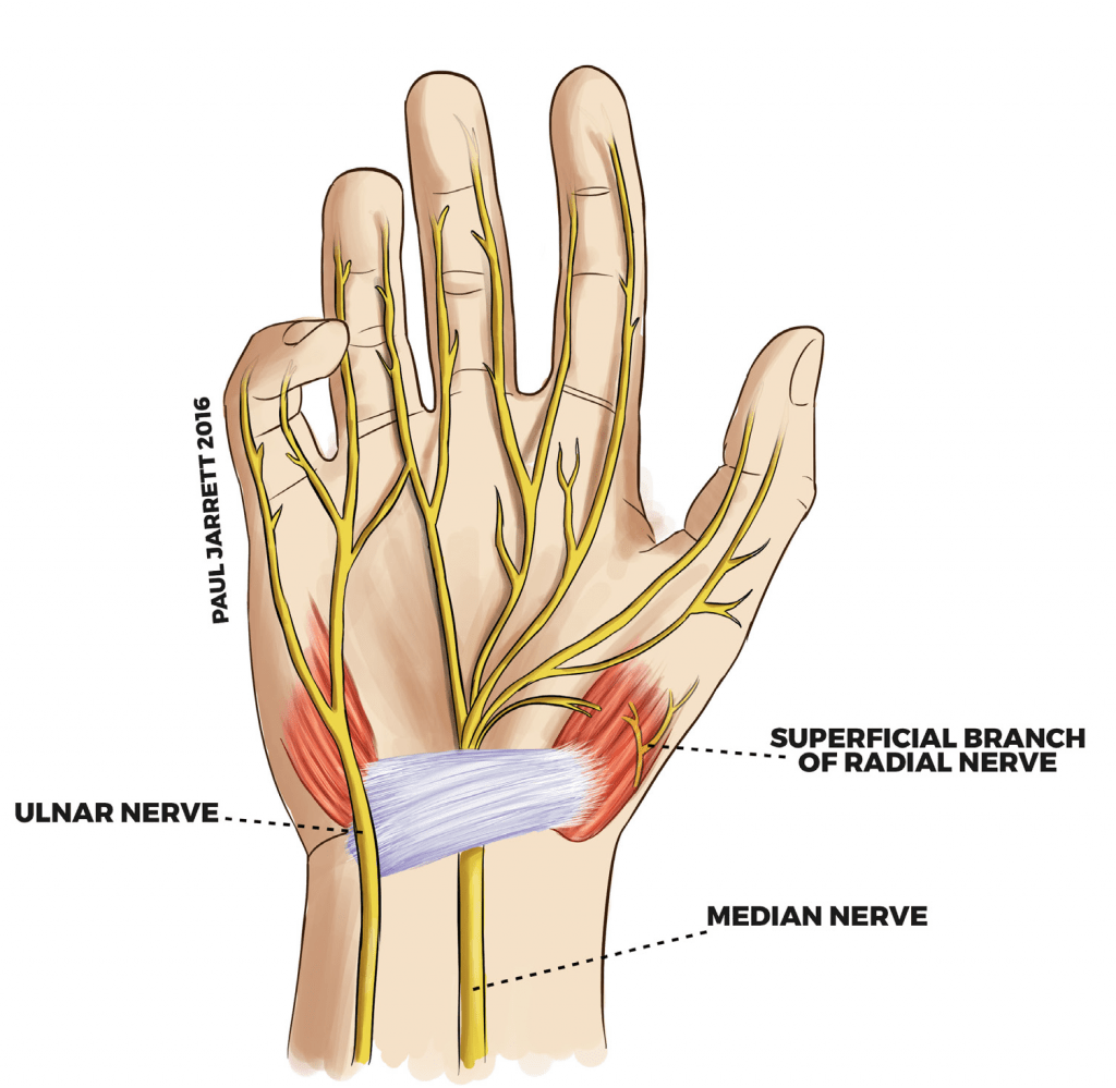 hight resolution of diagram of the main nerves that are connected from the wrist to the hand