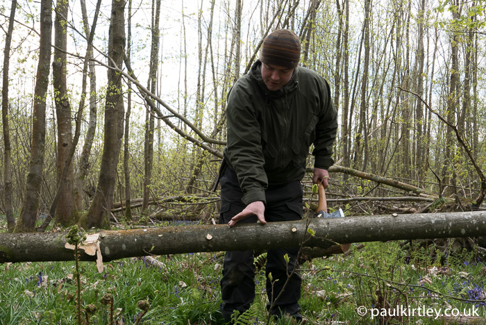 limbing and sectioning trees