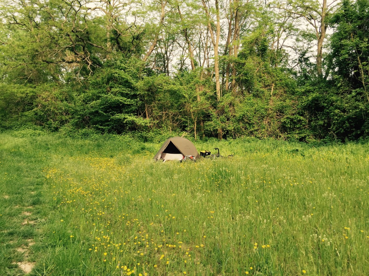 Tent amoung buttercups