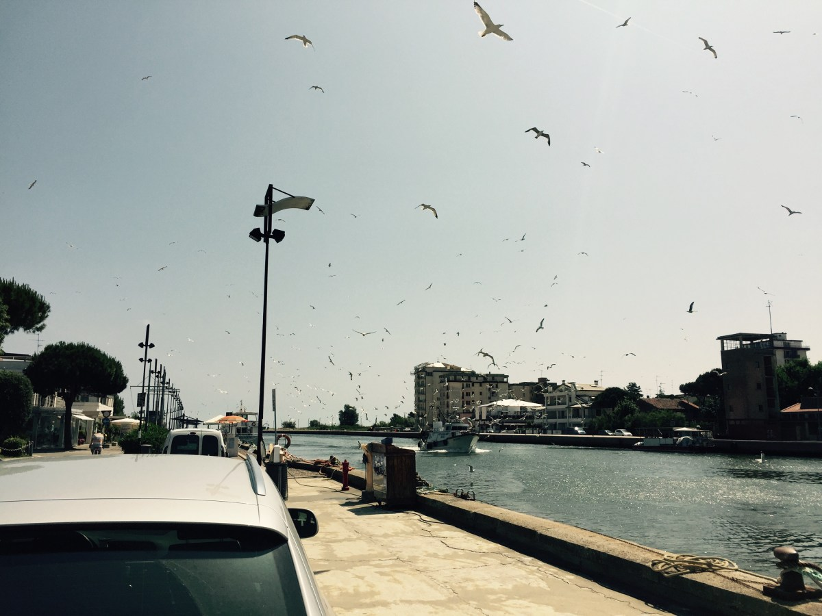 Seagulls bothering a returning fishing boat, Italy