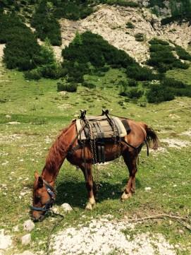 Pack horse, Triglav National Park, Slovenia