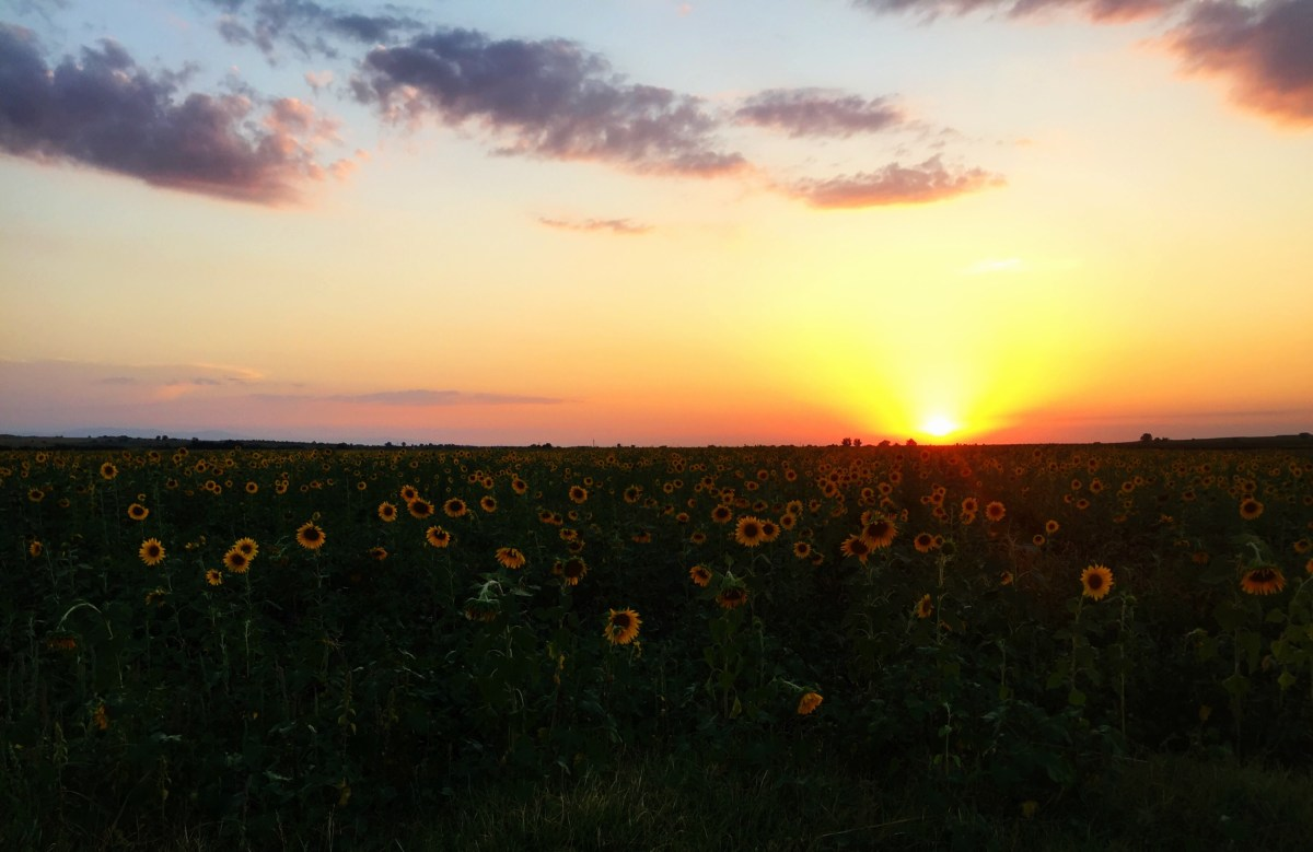 Sunflower sunset, Bulgaria