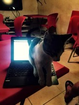 Helpful blogging cat, Istanbul