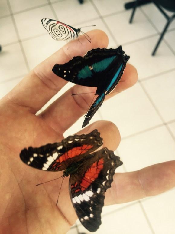 Butterflies, Paraná, Brazil