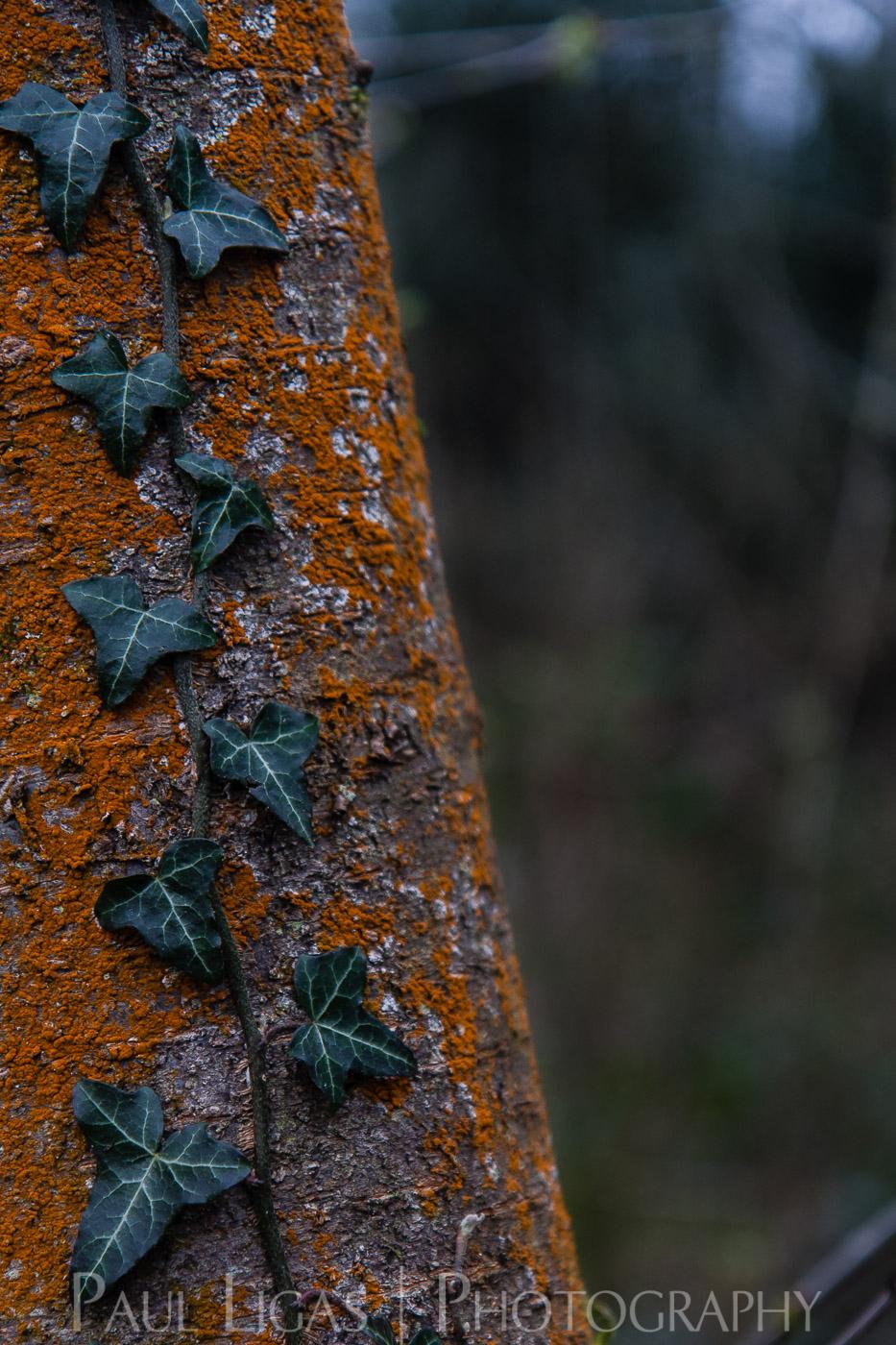 Dog Hill Wood, Ledbury, Herefordshire nature photographer photography landscape 6991