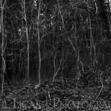 Dog Hill Wood, Ledbury, Herefordshire nature photographer photography landscape 6993