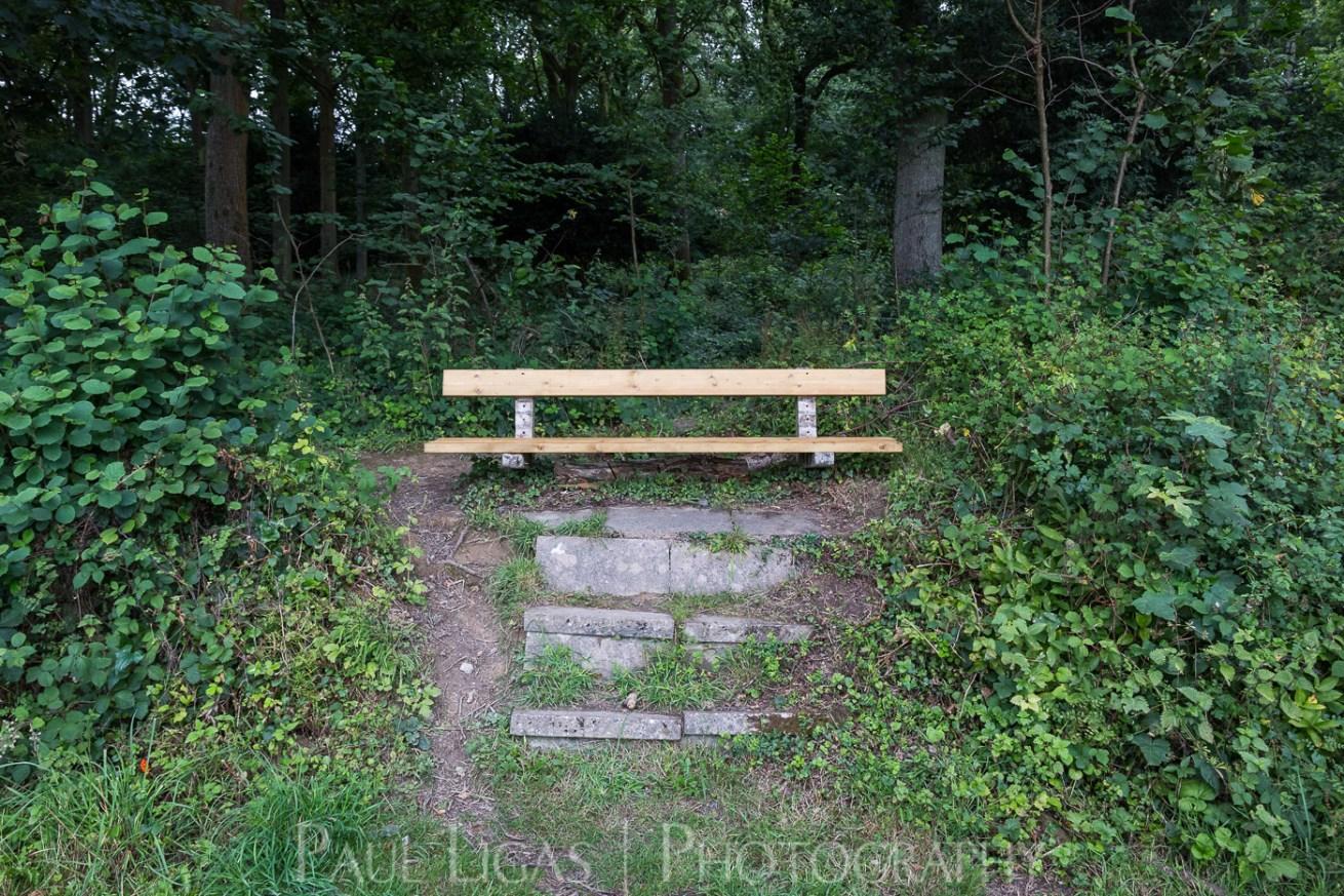 Dog Hill Wood, Ledbury, Herefordshire in Summer nature photographer photography landscape 0695