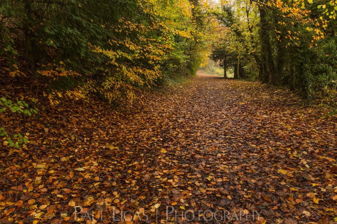 Dog Hill Wood, Ledbury, Herefordshire in Autumn nature photographer photography landscape 2653