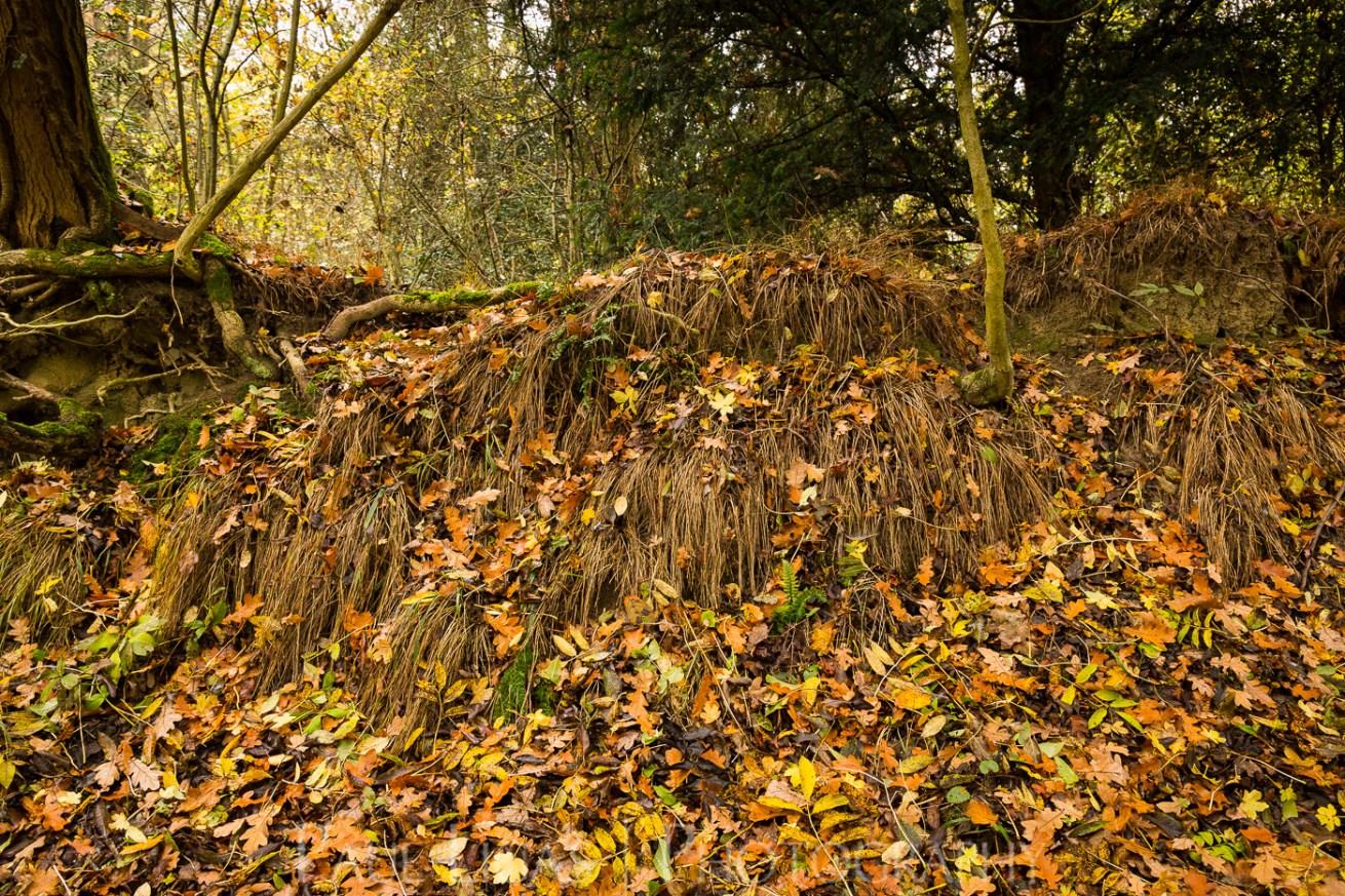 Dog Hill Wood, Ledbury, Herefordshire in Autumn nature photographer photography landscape 2671