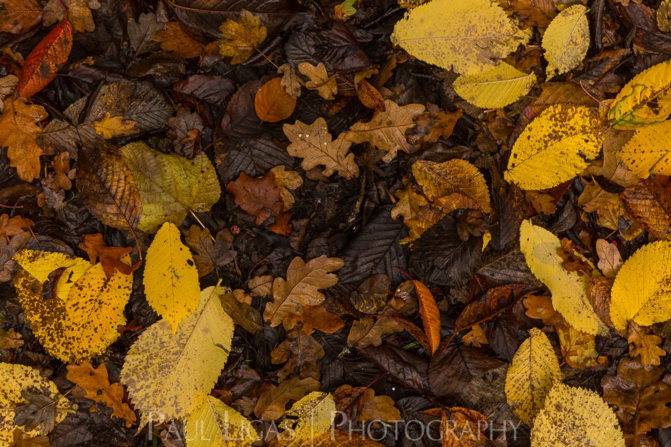 Dog Hill Wood, Ledbury, Herefordshire in Autumn nature photographer photography landscape 2683