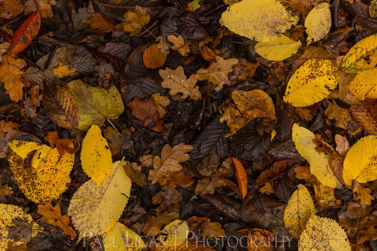 Dog Hill Wood, Ledbury, Herefordshire in Autumn nature photographer photography landscape 2683